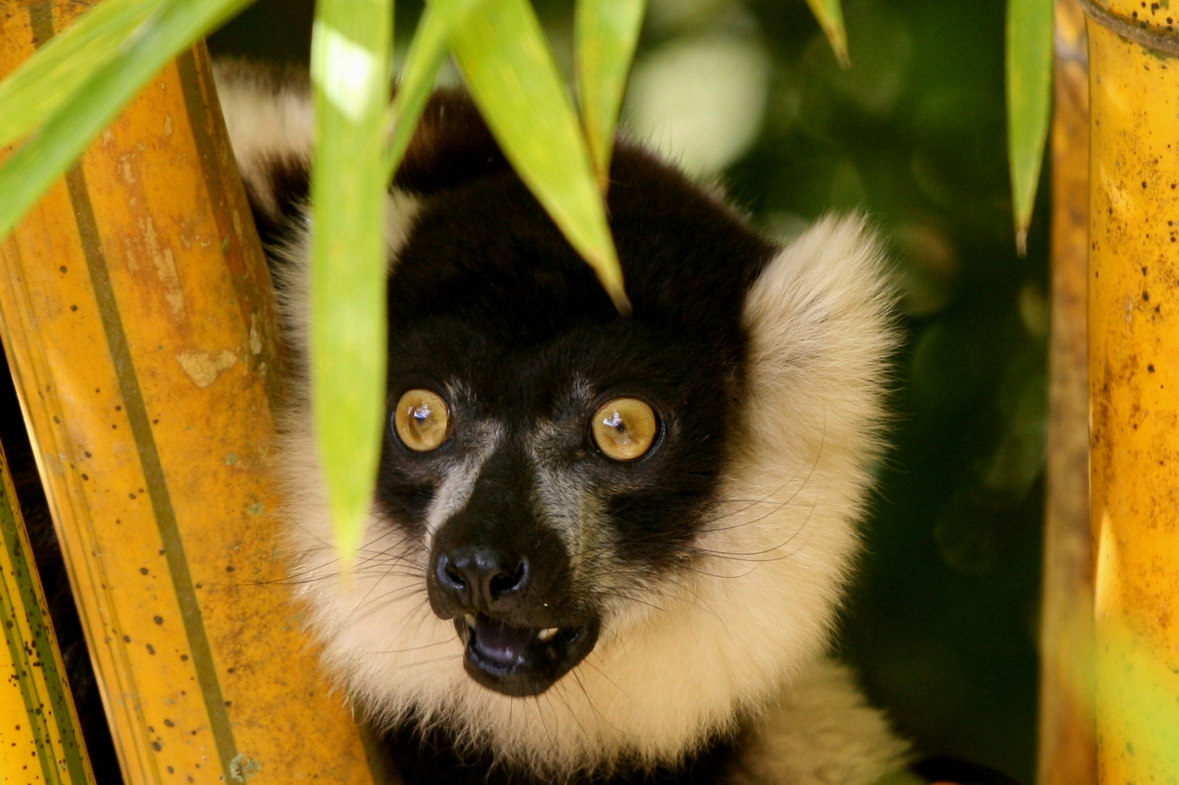 Photograph MADAGASCAR by Darren  Colello on 500px