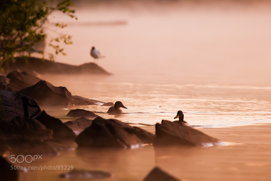 Photograph Hello duck by Alexei Mikhailov on 500px