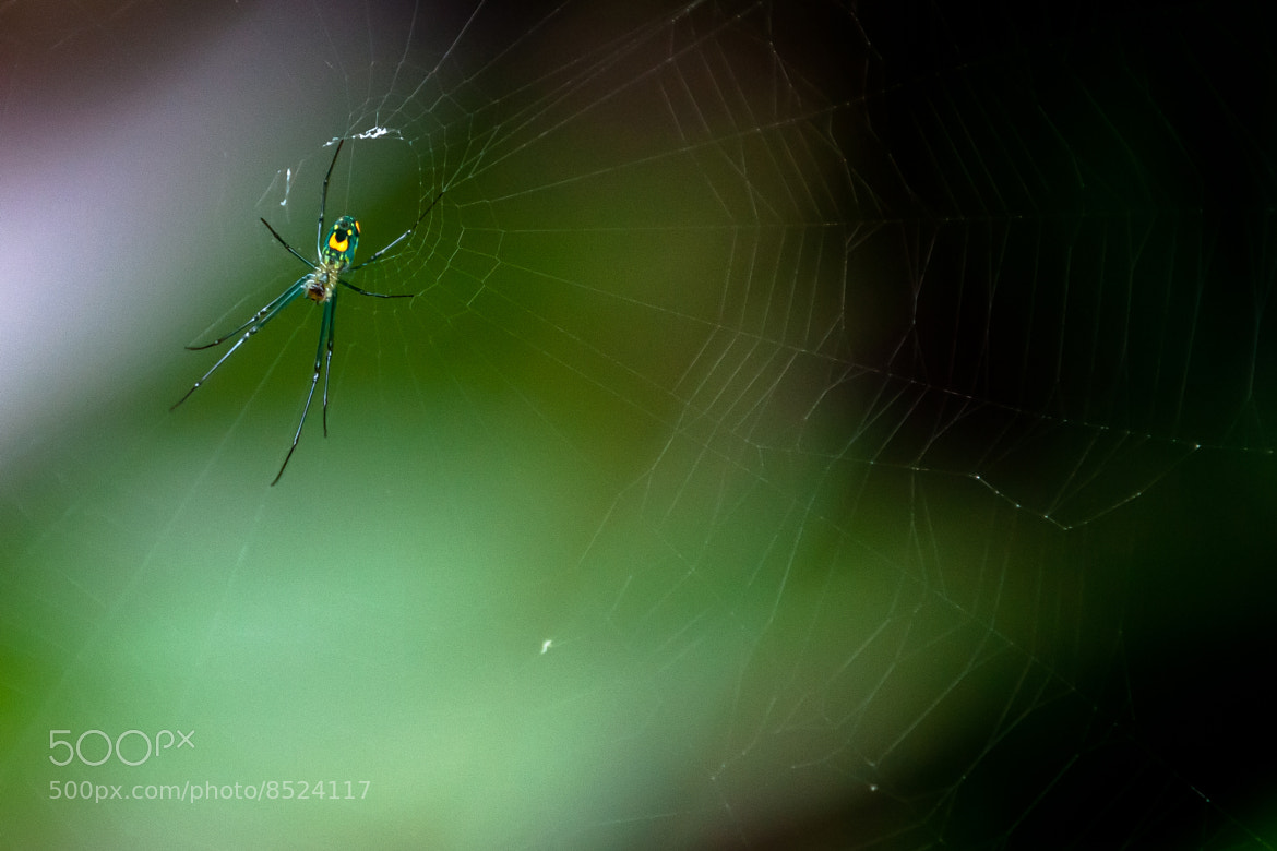 Photograph Orchard Spider by George Bloise on 500px