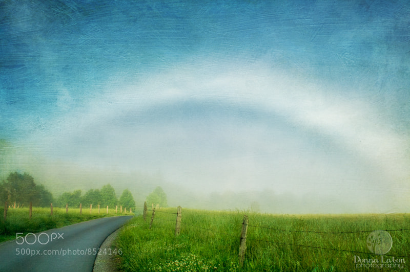 Photograph Cove Fogbow by Donna Eaton on 500px