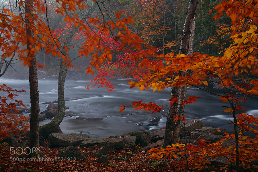 Photograph River, Mist, and the Season by Henry Liu on 500px