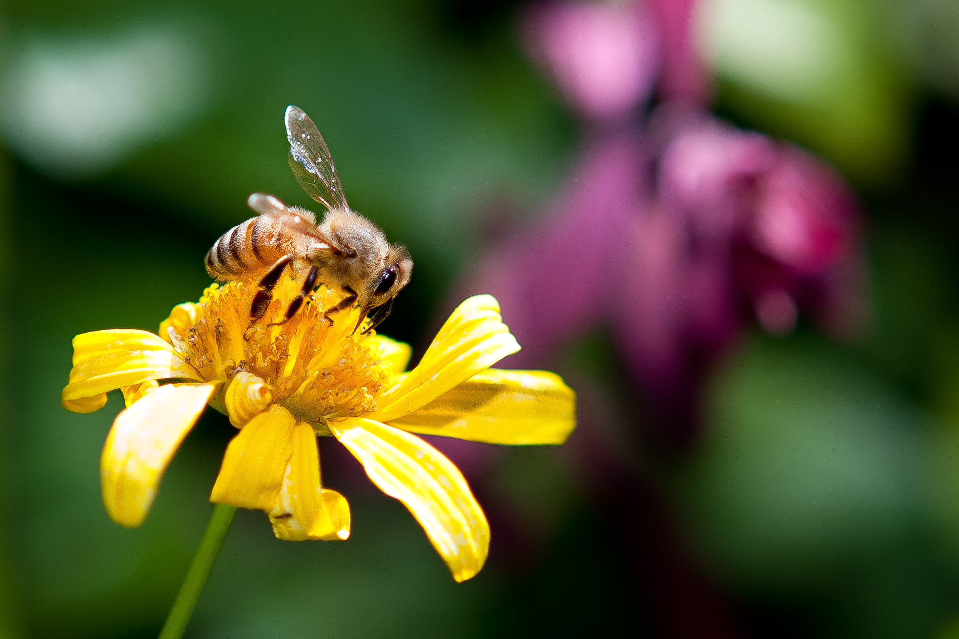 Photograph Yellow Bee by George Bloise on 500px