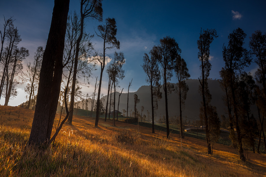 Photograph Autumn in Bromo by Hafiz Ismail on 500px