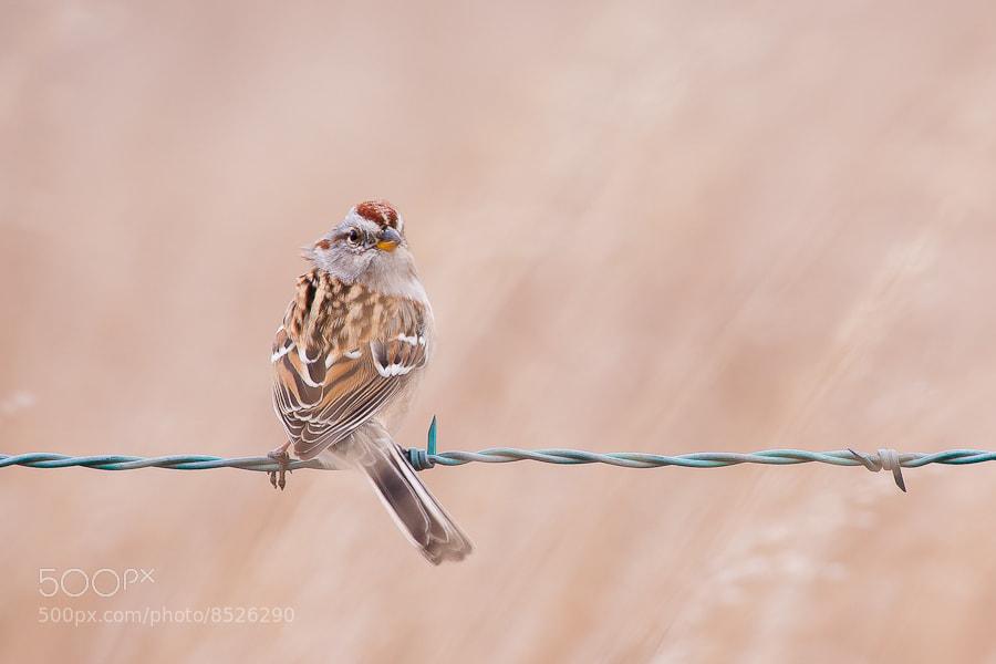 Photograph Dinky by EA Vernarsky on 500px