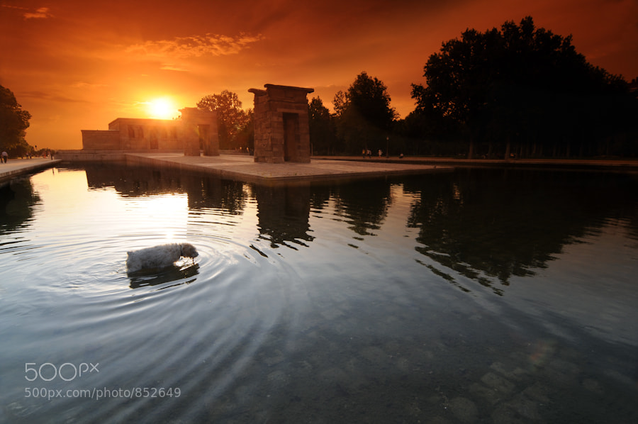 Photograph The Sacred Dog by Jose Maria Cuellar on 500px