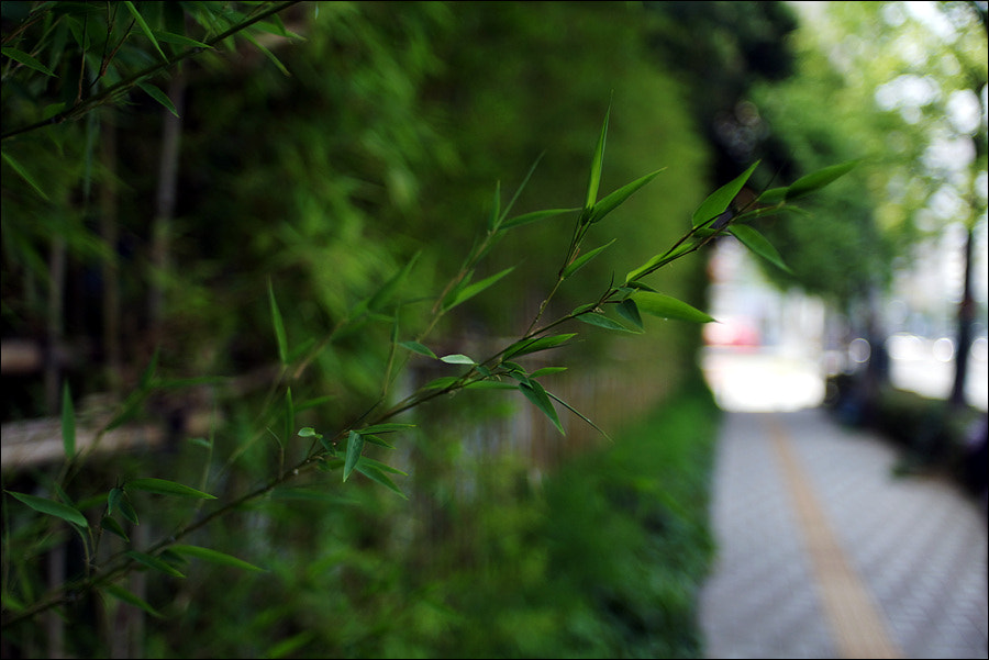 Photograph bamboo fence by D W Kim on 500px