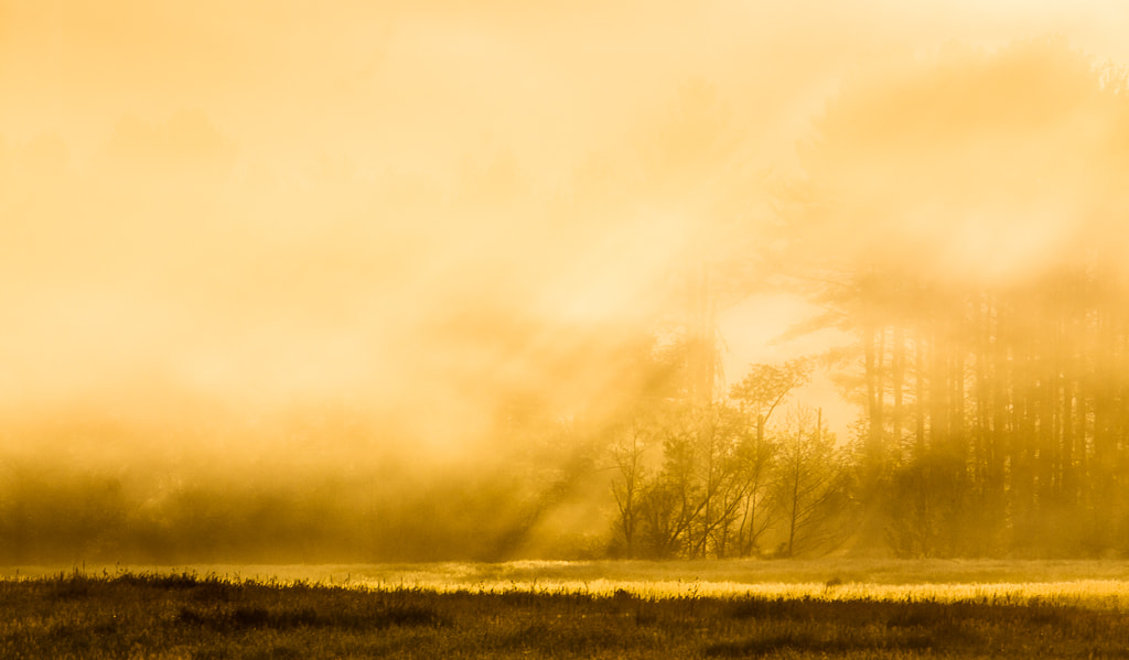 Photograph Morning Mist by Greg Booher on 500px