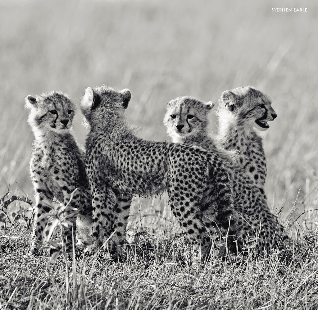 Photograph Siblings by Stephen Earle on 500px