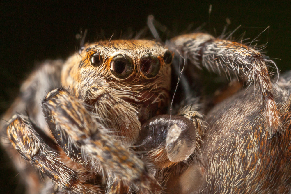 Photograph Spider Wrestle by Oliver Wright on 500px