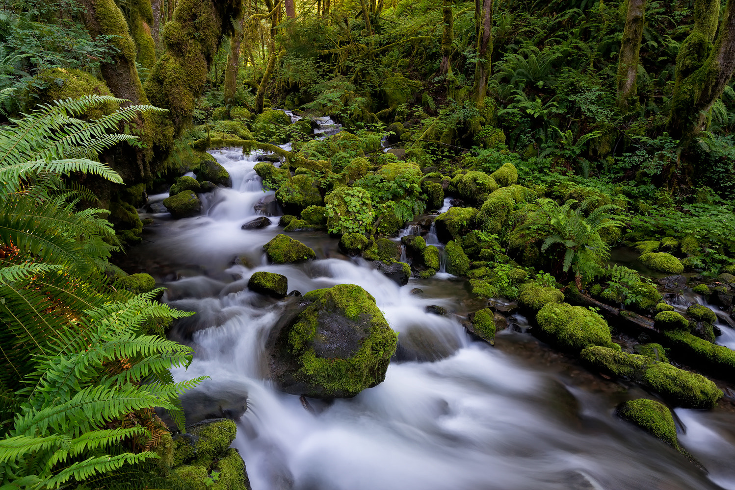Photograph Up on Ruckel Creek... by James Newkirk on 500px