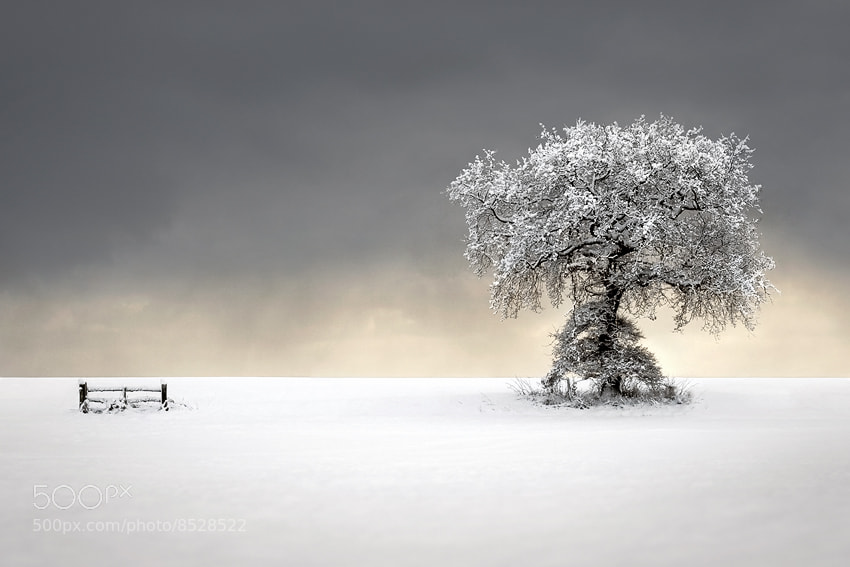 Photograph Winters Picnic by Liam Frankland on 500px