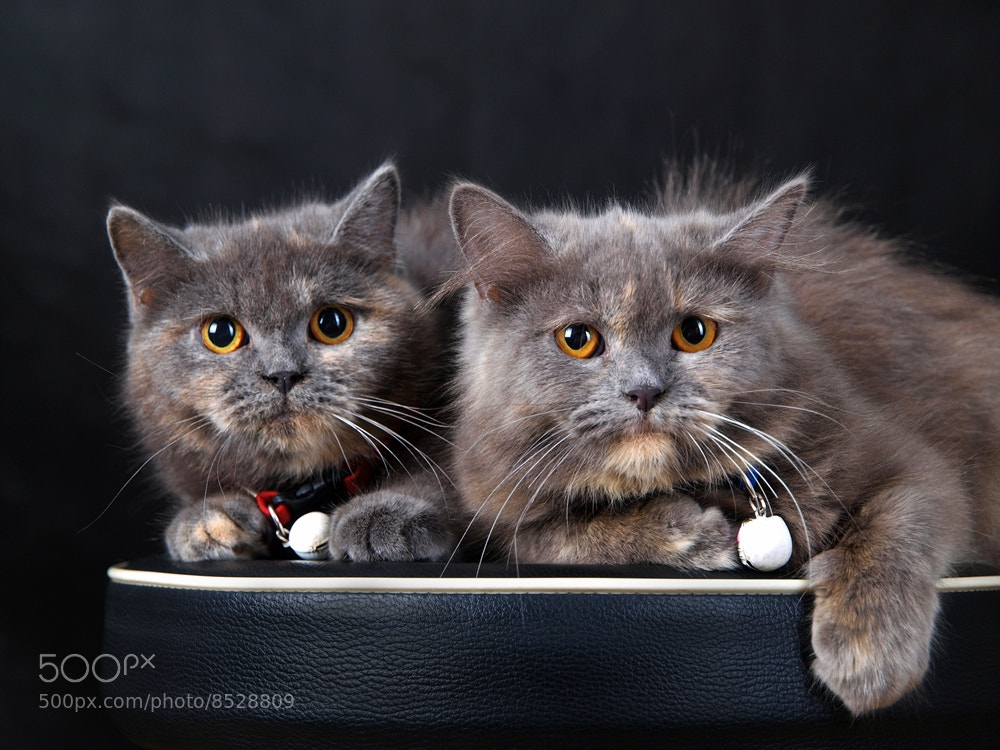 Photograph they're two by Irawan Subingar on 500px