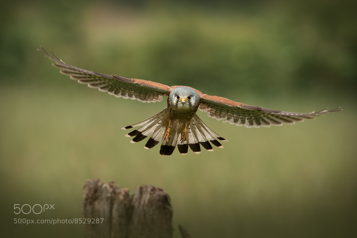 Photograph The Male of The Species by Andy Astbury on 500px