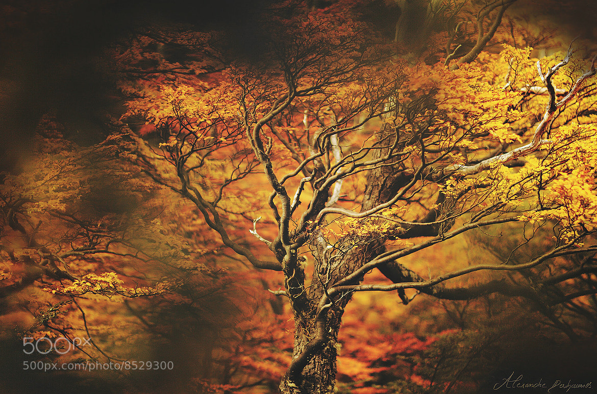 Photograph L'Arbre de Feu by Alexandre Deschaumes on 500px