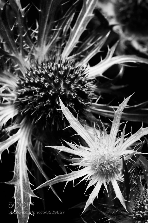 Photograph Twin Starbursts by David Manzi on 500px