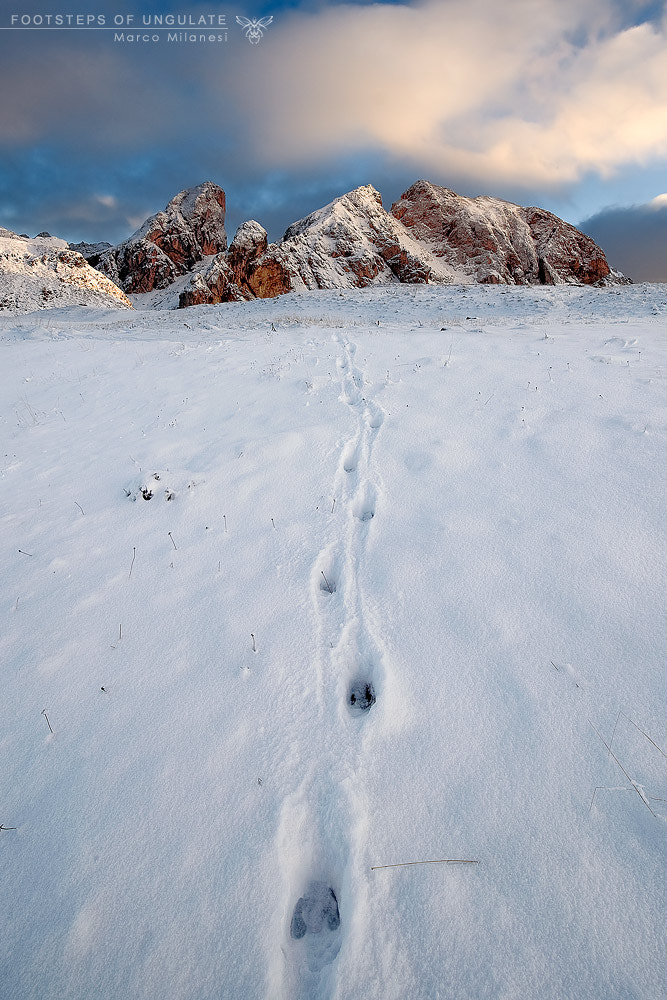 Photograph Footsteps of Ungulate by Marco Milanesi on 500px