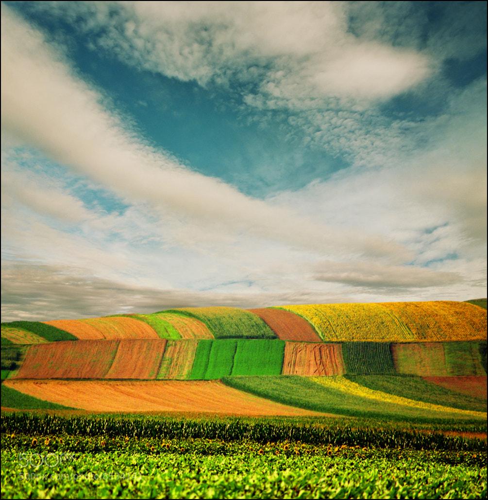 Photograph Spring song by Katarina Stefanović on 500px