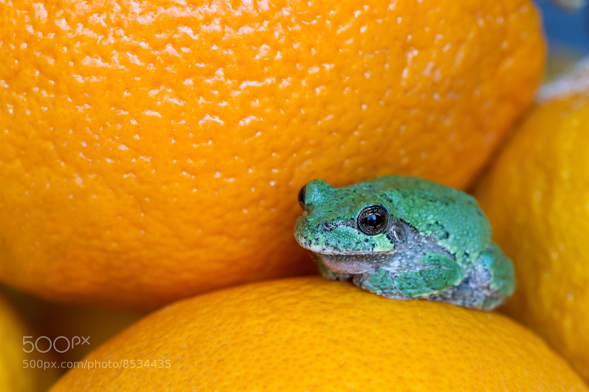 Photograph Tree Froggie by Corrie White on 500px
