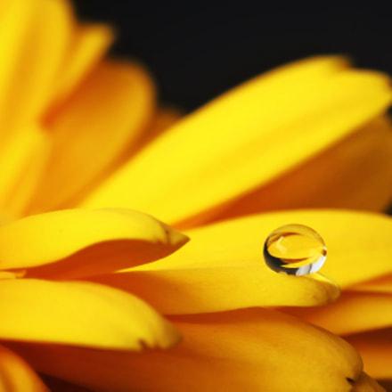 On the edge... of a daisy