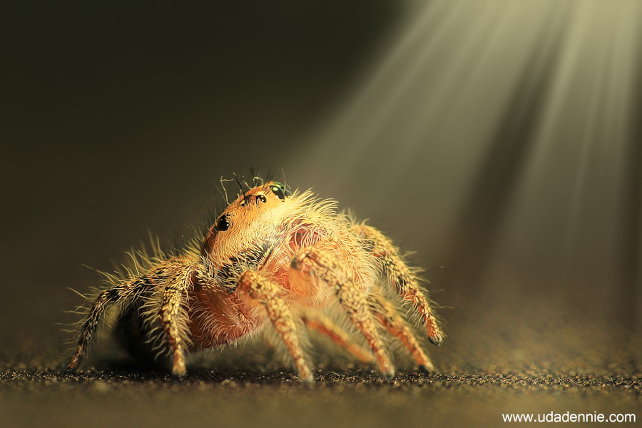 Photograph Under the light by Uda Dennie on 500px