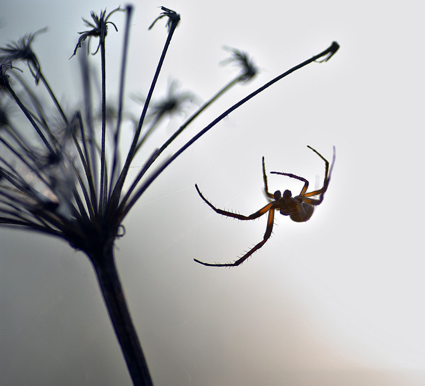 Photograph Spider... by I'm Olga on 500px
