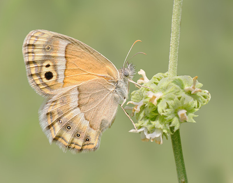 Photograph Butterfly 6 by Soheil Shahbazi on 500px