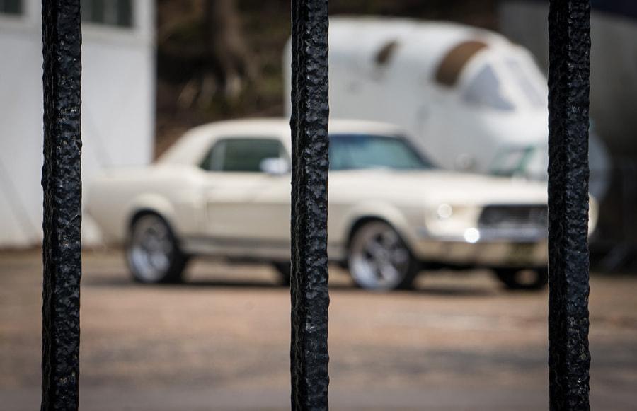 __Mustang Behind Bars__