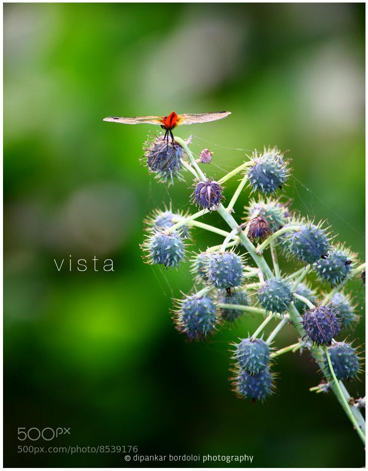 Photograph Vista by Dipankar Bordoloi on 500px
