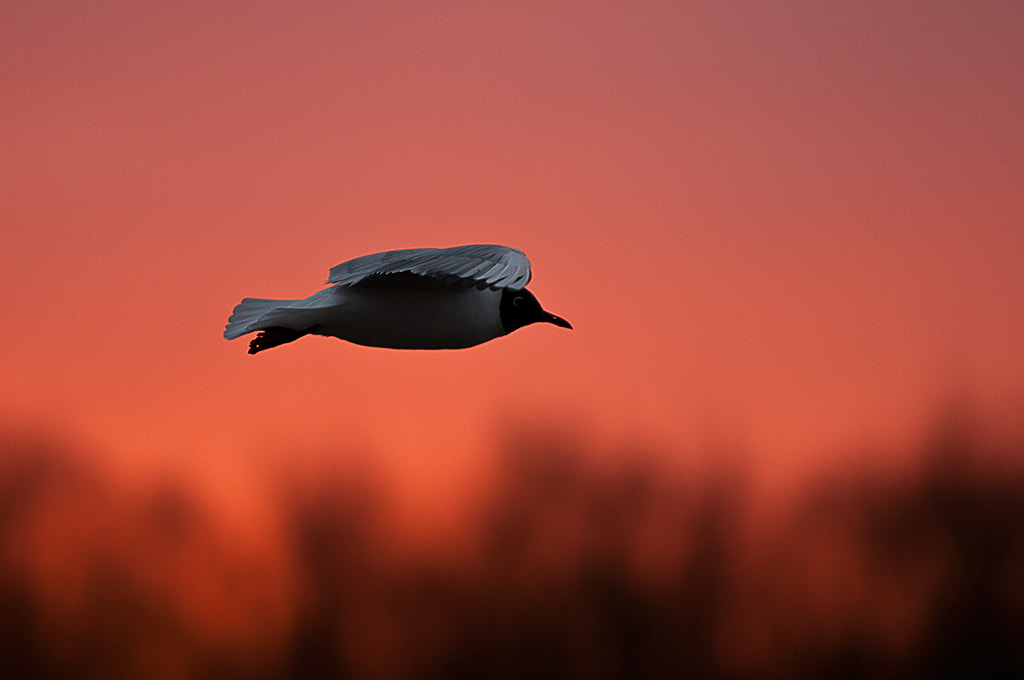 Photograph just bird and west by Mirek Rojczyk on 500px