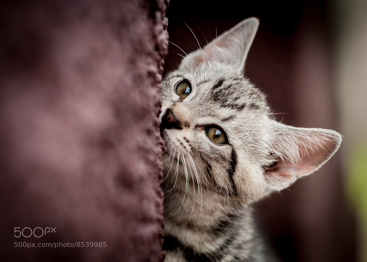 Photograph Kitty by Andrej Lencucha on 500px