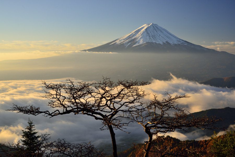 Photograph Bonsai Fuji 2 by Takashi  on 500px