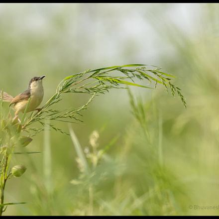 Mr. Birdy