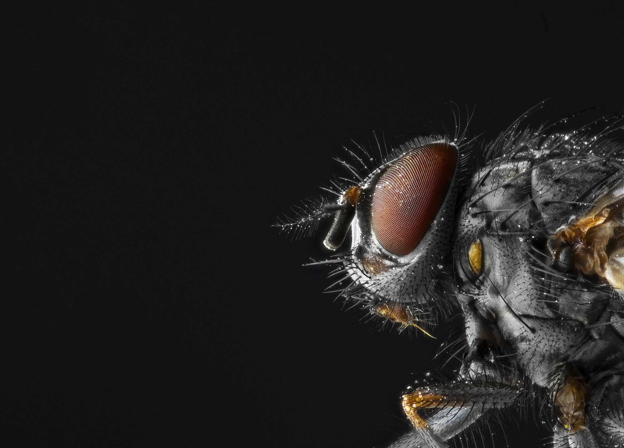 Photograph The Fly by Mikael Sundberg on 500px