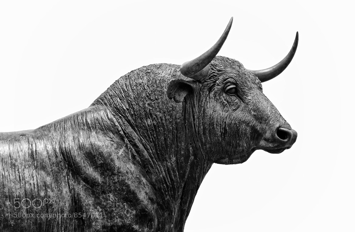 Photograph Ronda Bull by ---ROB---  PHOTOGRAPHY on 500px