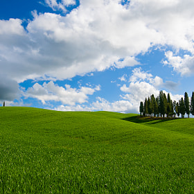 cypress in Toscana by Antonio Cutrona (cutter)) on 500px.com