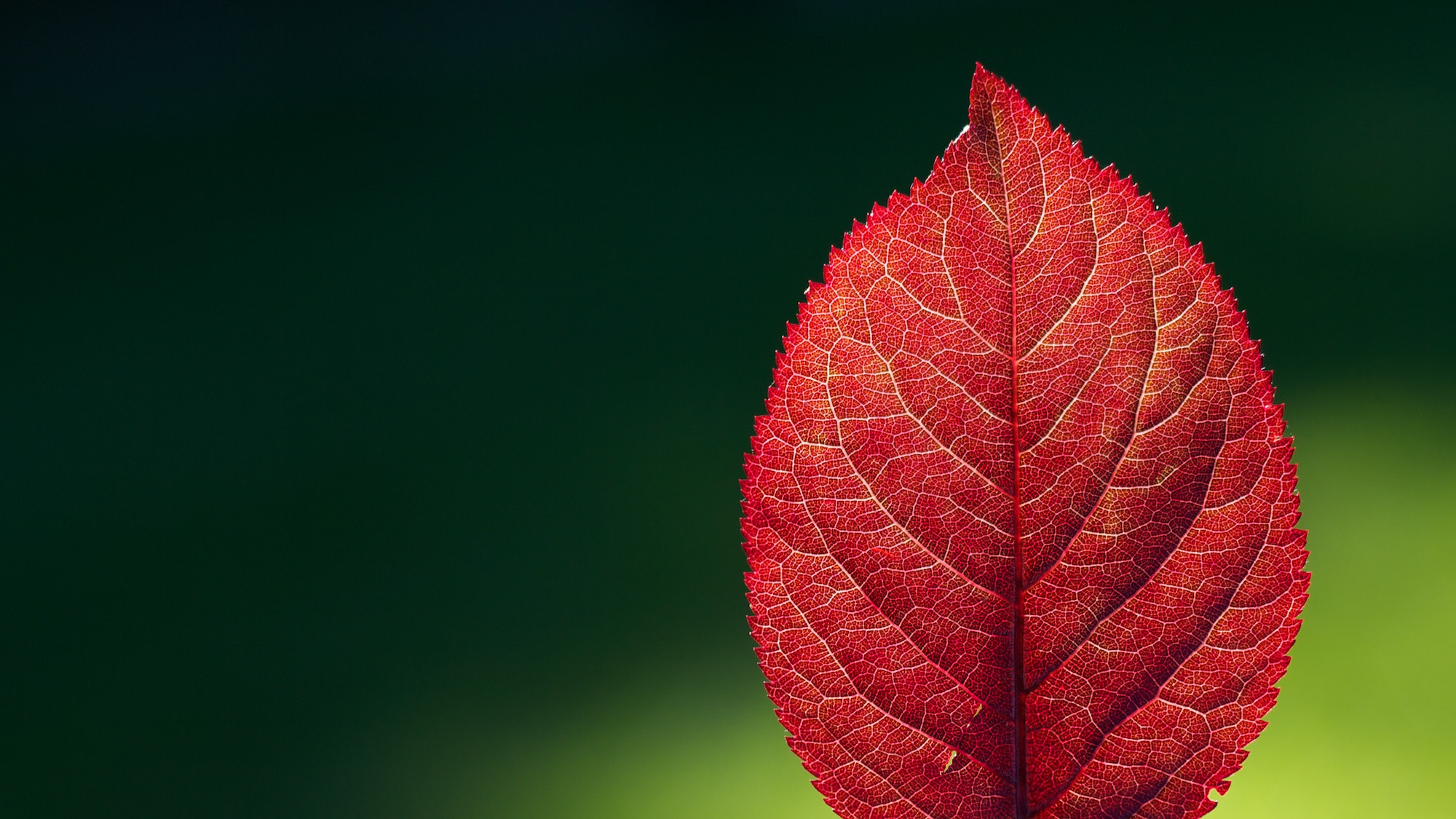 Photograph Hoja Roja by Pablo Castro on 500px