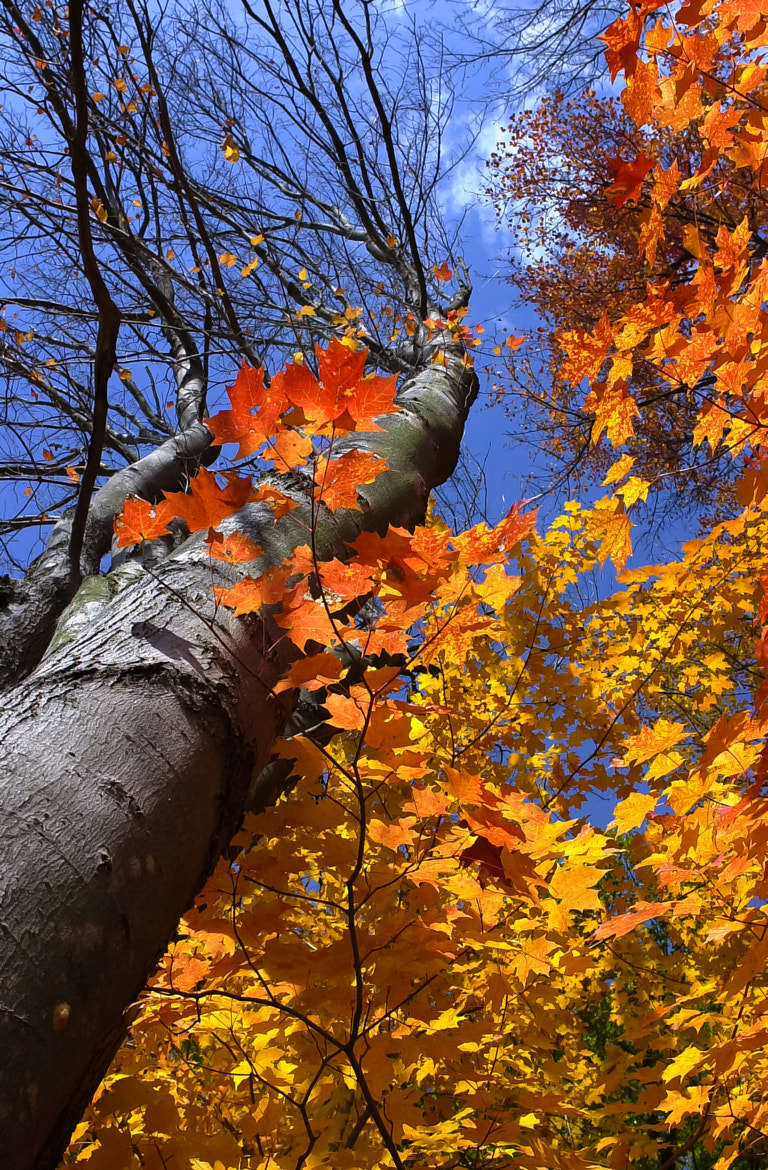 Photograph Autumn Colors by George Bloise on 500px