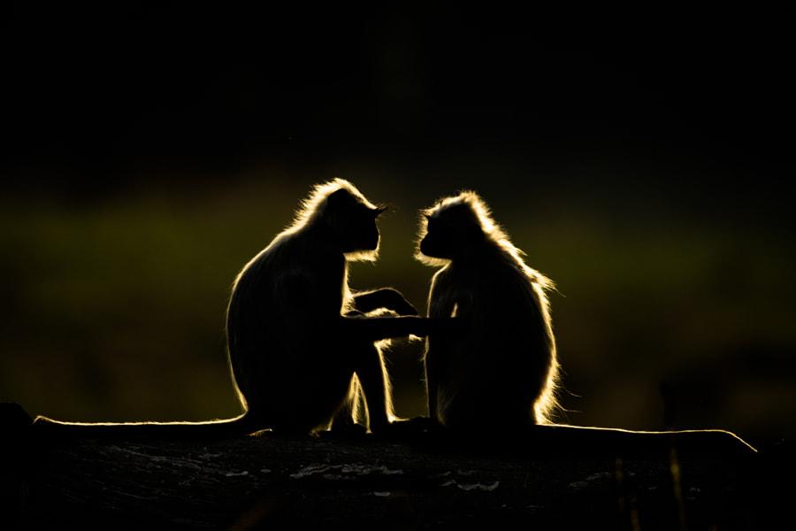 Tender Moment... by Kanwar Deep Juneja on 500px.com