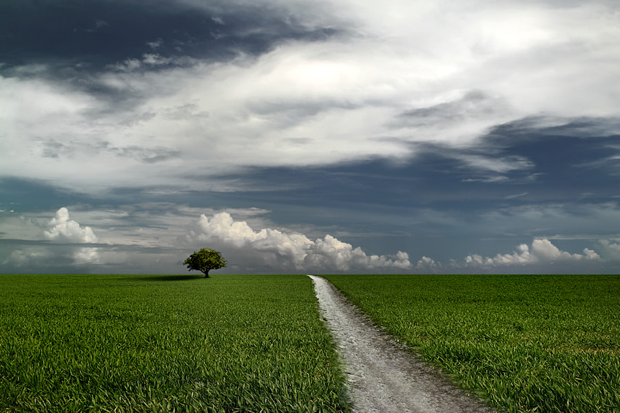 Photograph Tree on a Path by Carlos Gotay on 500px