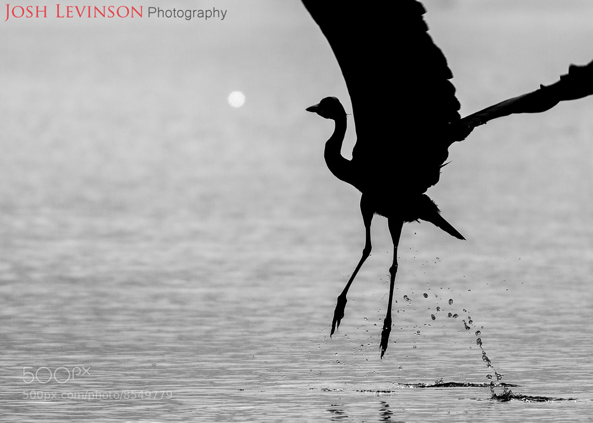 Photograph Ba-bye now by Josh Levinson on 500px
