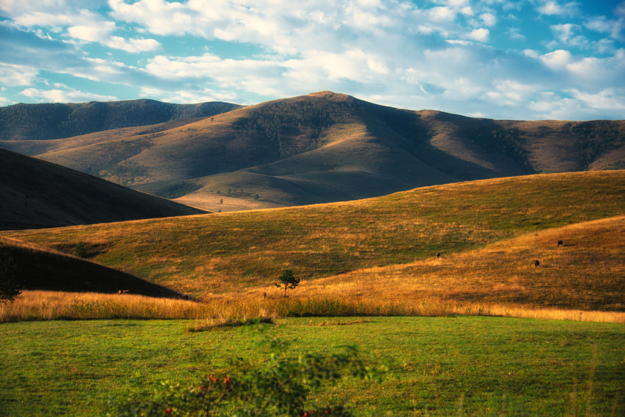 Mt. Zlatibor by Svetlana Peric on 500px.com