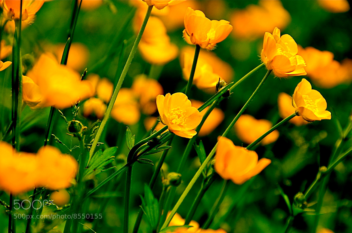 Photograph Dreams running wild by nakky in on 500px