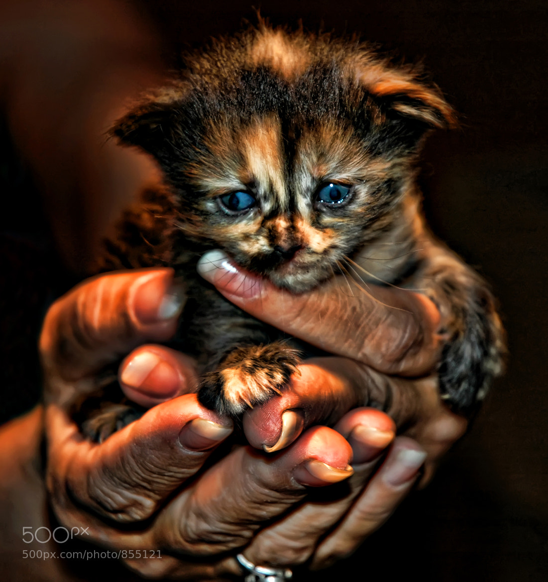 Photograph In Tender Hands by Jeff Clow on 500px