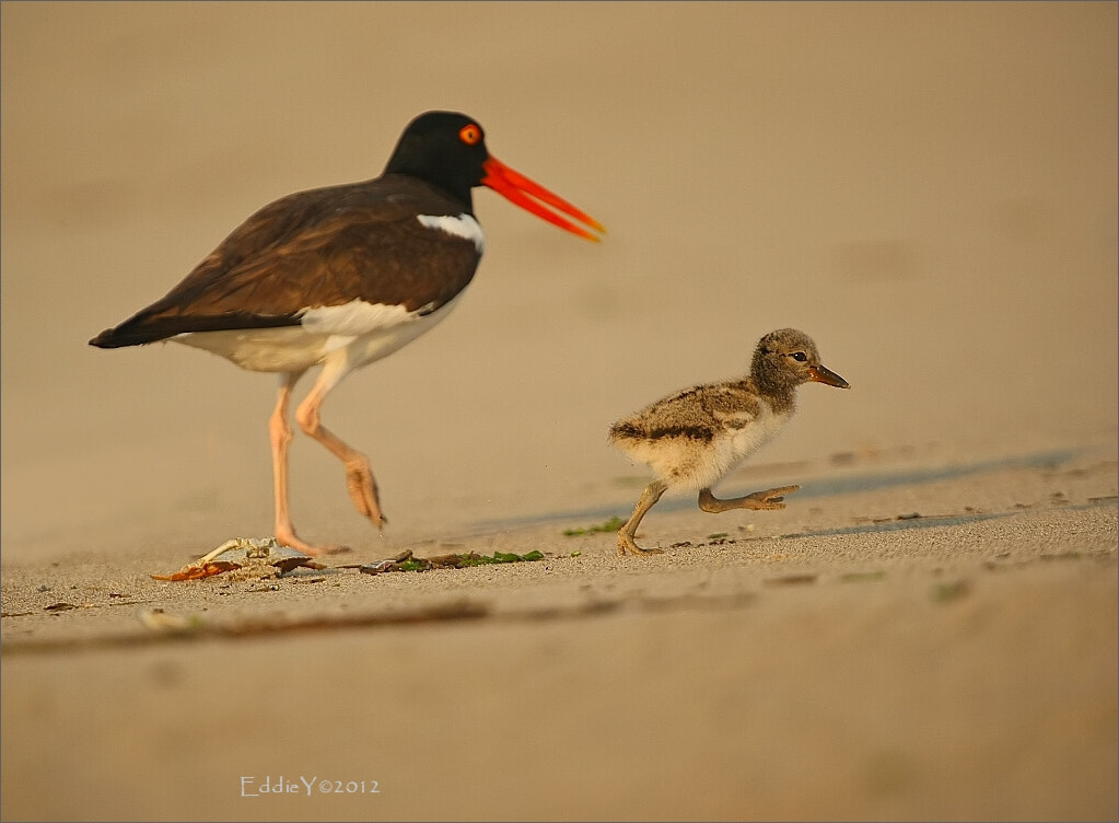 Photograph Walking (Running) with Mommy by Eddie Yu on 500px