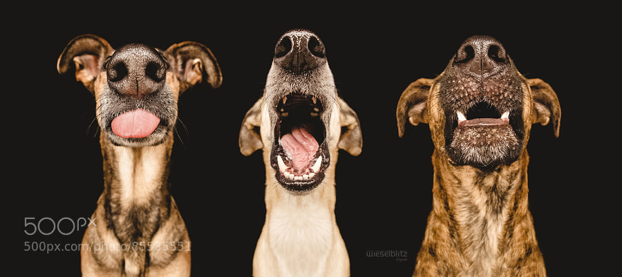 Photograph Nice Nosing You by Elke Vogelsang on 500px