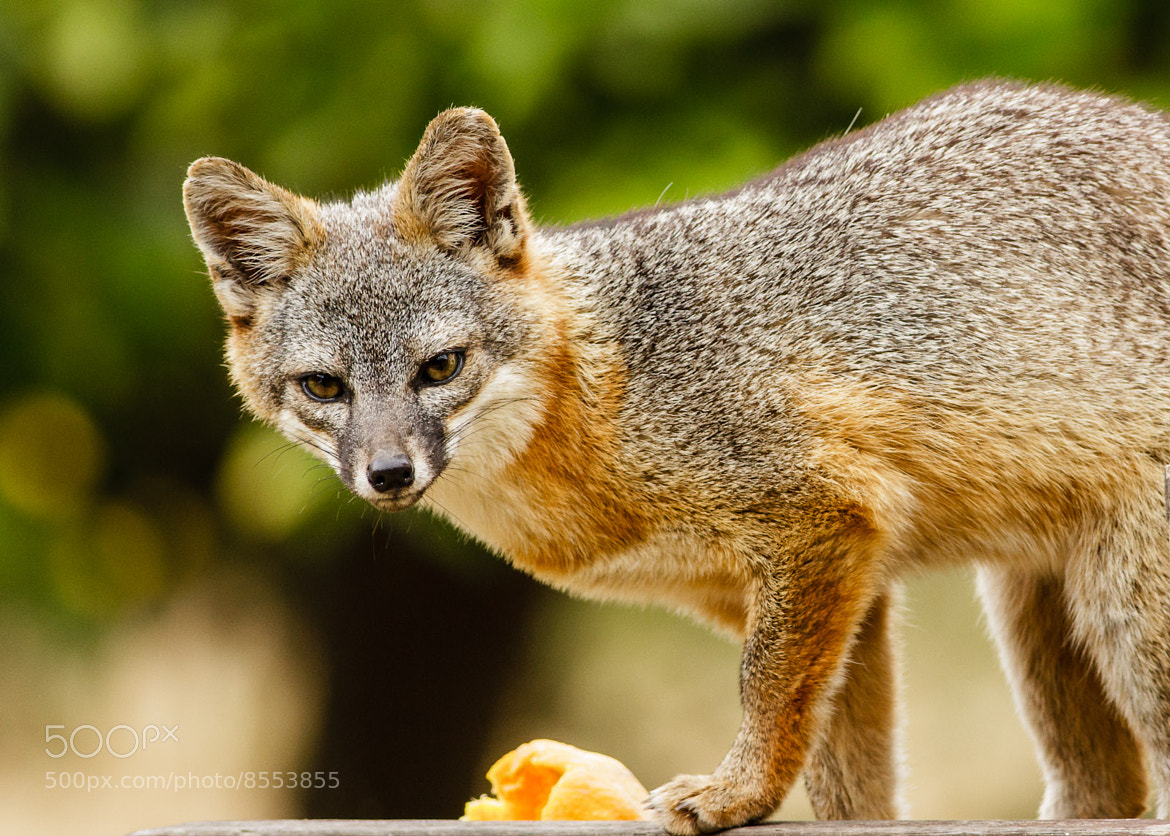 Photograph Sorry this orange is all mine...... by Carl Jackson on 500px