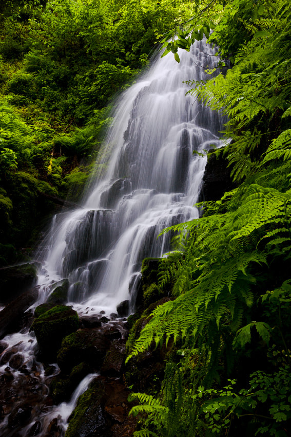 Photograph Fairy Falls by Ned Fenimore on 500px