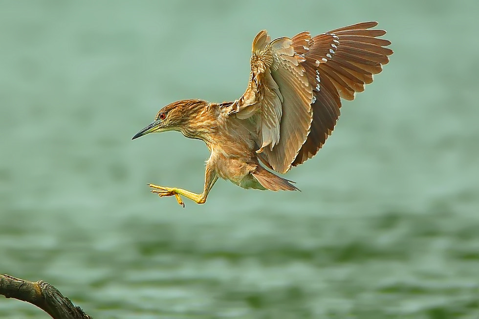 Photograph Ready For Landing by Dajan Chiou on 500px