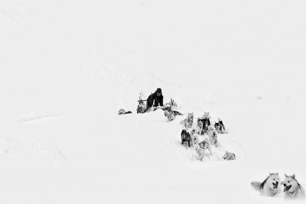 Photograph Inuït  hunter in Greenland  by Nicole Cambré on 500px
