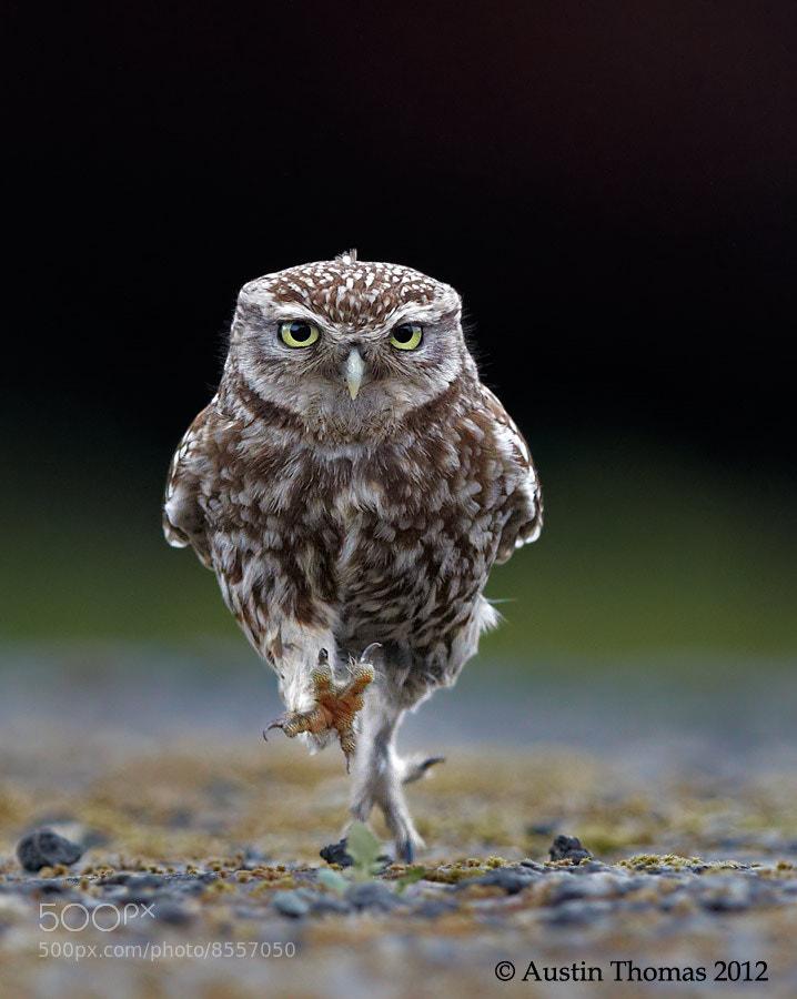 Photograph OWLympics by Austin Thomas on 500px